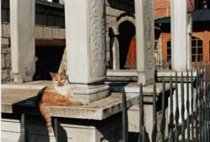Katze an Grabsteinen auf Friedhof in Sarajevo. Foto: Paul Gronert
