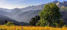 Gebirgslandschaft mit Baum und Wiese im Vordergrund. Foto: Ilja Bunin